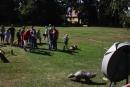 Beim Bogenschießen bewiesen die Besucher ihre Treffsicherheit.
