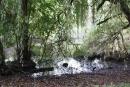 Der Goebenteich ist der einzige Naturteich im Stadtpark. Foto: Gogol