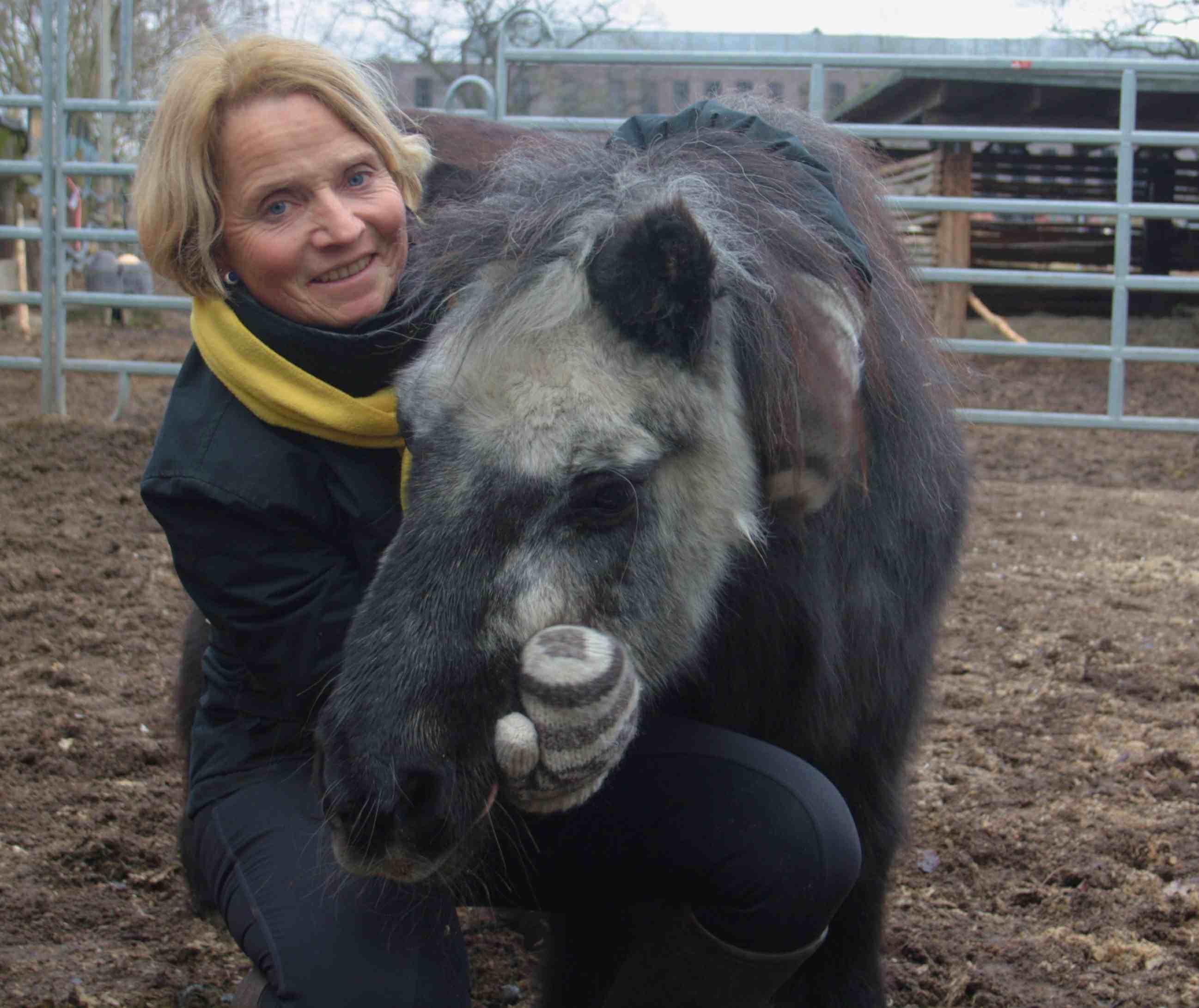 """""""Stur wie jetzt"""": Madame Nou – Deutschlands ältestes Pony – wird 50"""