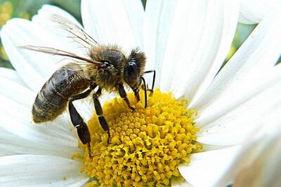 Wildbienen-Vortrag in der Gartenarbeitsschule Steglitz-Zehlendorf