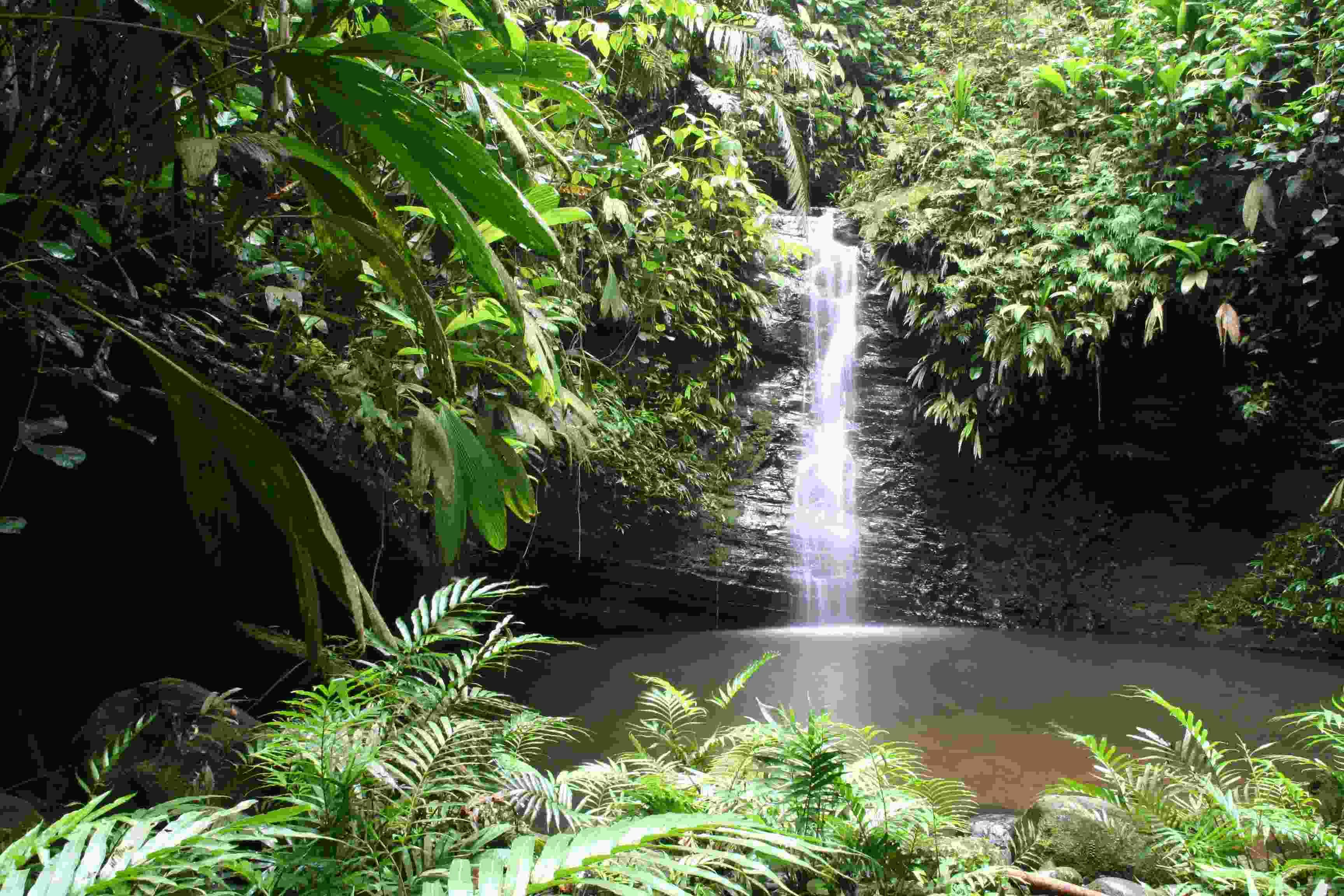 Wasser Wasserfall In Den Tropen C N Koster Botanischer Garten