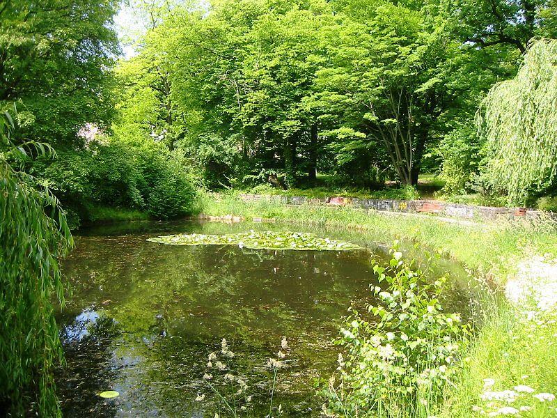Stadtpark Steglitz: Historische Allee bekommt neue Ulmen