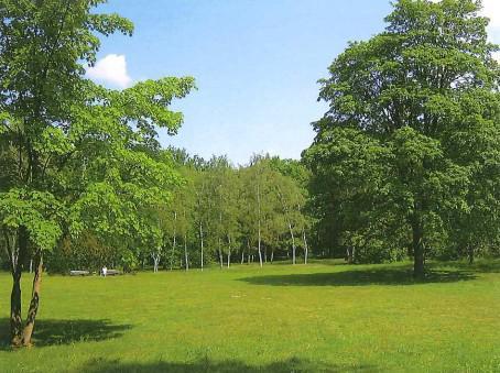 Fällung von Bäumen aufgrund von Schädigungen