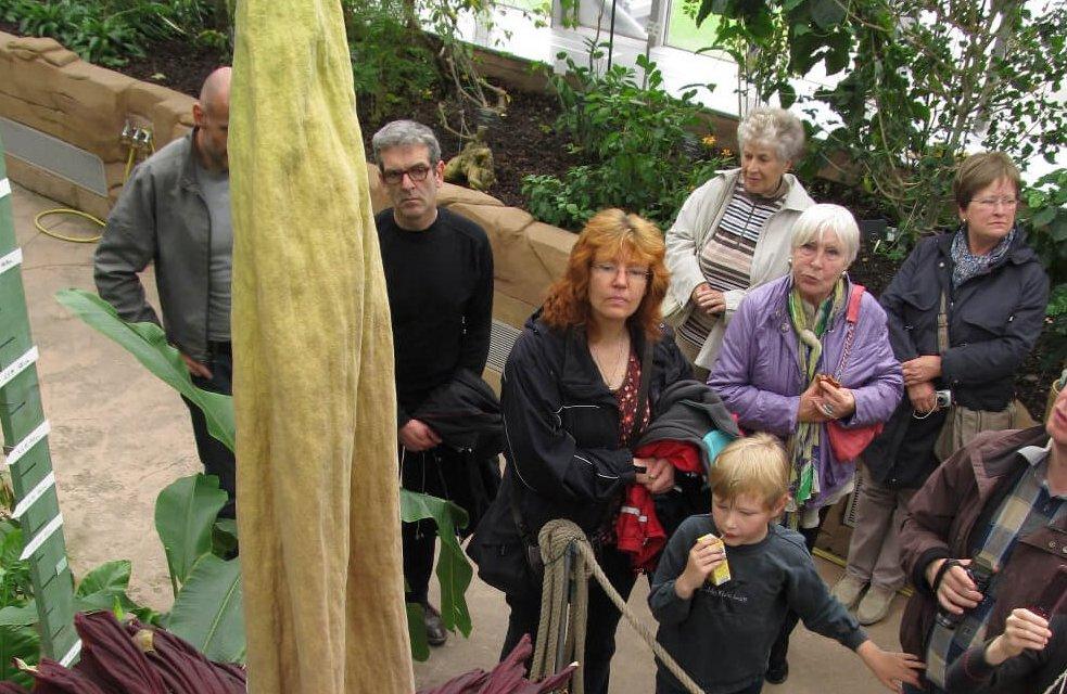 Größte Stinke-Blume der Welt steht kurz vor der Blüte