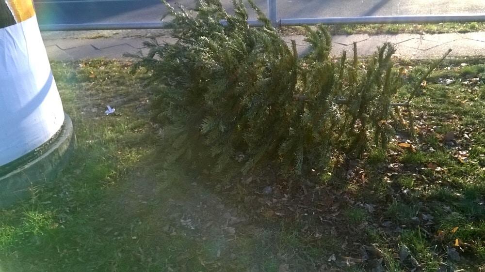 Weihnachtsbaum berlin zehlendorf