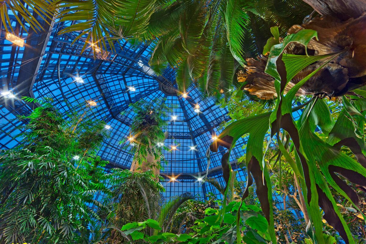 Urlaubsstimmung mitten im Winter – Botanischer Garten lädt zu Tropischen Nächten ein