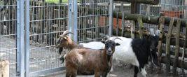 Carlos, Heidi und Schnucki leben erst seit wenigen Wochen am Platz am wilden Eber. Foto: Gogol