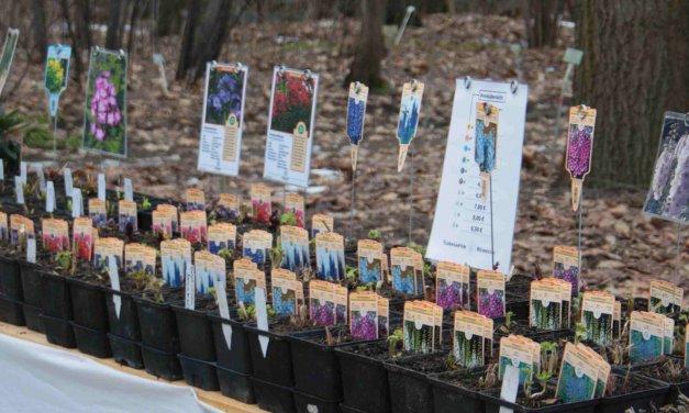 Zeit für Frühling: Staudenmarkt im Botanischen Garten in Lichterfelde