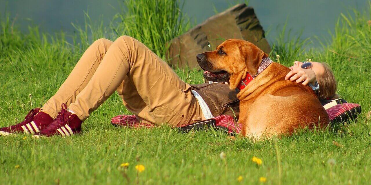 Mit und ohne Hund an Schlachtensee und Krumme Lanke: Bezirksamt informiert über die geltenden Regeln