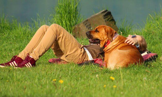 Mit Hund an Schlachtensee und Krumme Lanke – diese Regeln müssen Sie beachten