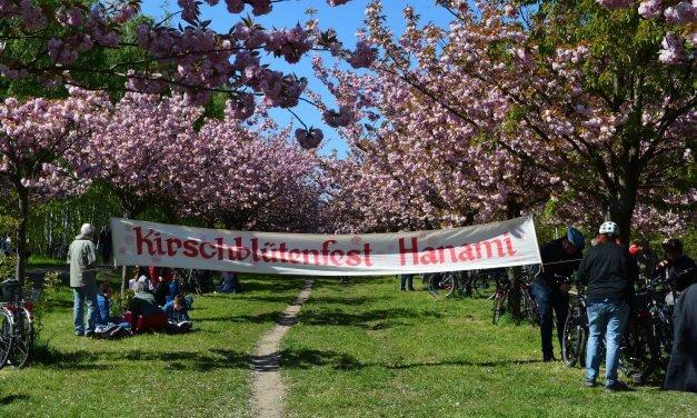 Tausende Besucher beim 16. Kirschblütenfest