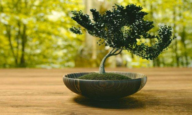 Kleine Bäume ganz groß: Bonsai-Ausstellung im Botanischen Garten in Lichterfelde