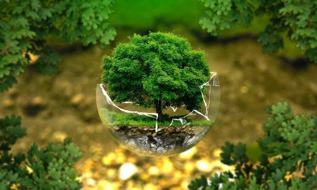 Umweltpreis für Steglitz-Zehlendorf wird wieder ausgelobt