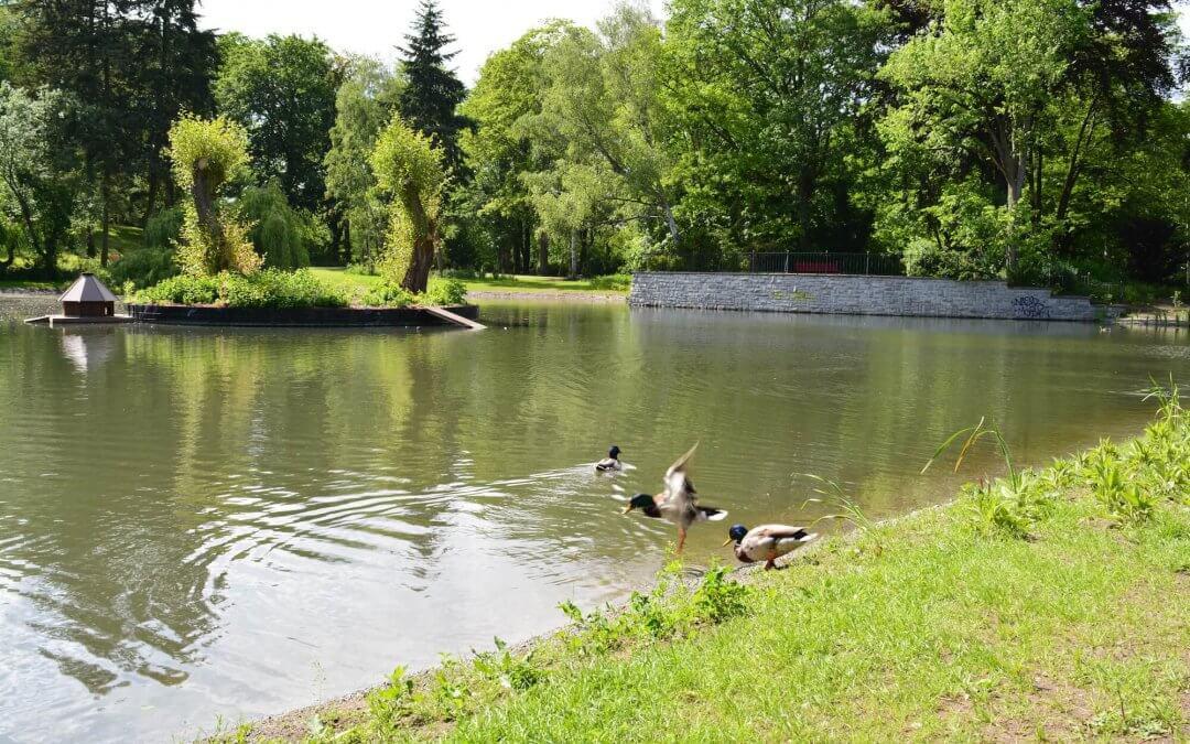 Teich im Gemeindepark Lankwitz kippt