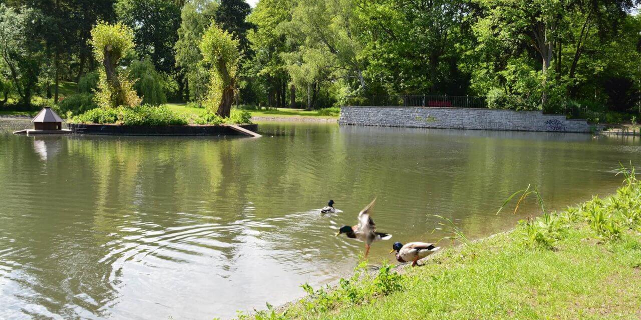 Teich im Gemeindepark Lankwitz fertig saniert