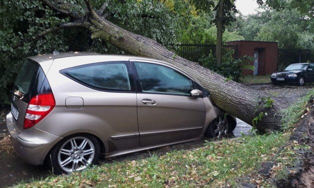 Entwurzelte Bäume, überflutete Unterführung – Unwetter im Berliner Süden