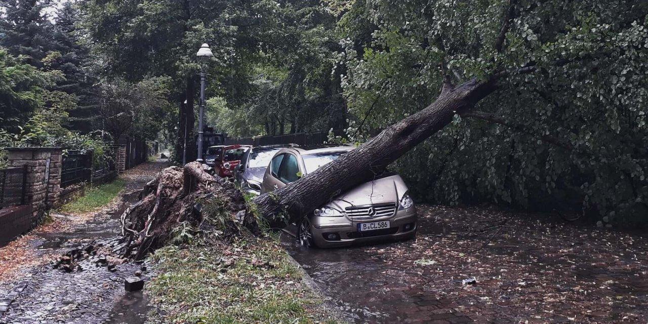 """So viele Bäume fällte """"Xavier"""" in Steglitz-Zehlendorf"""