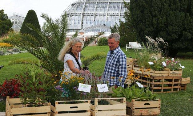 Raritäten für Garten und Balkon entdecken: Staudenmarkt im Botanischen Garten