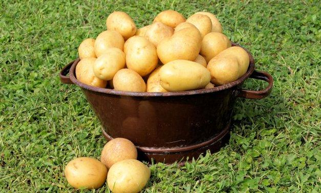 Kartoffelfest in Lichterfelder Jugendfreizeiteinrichtung Albrecht Dürer