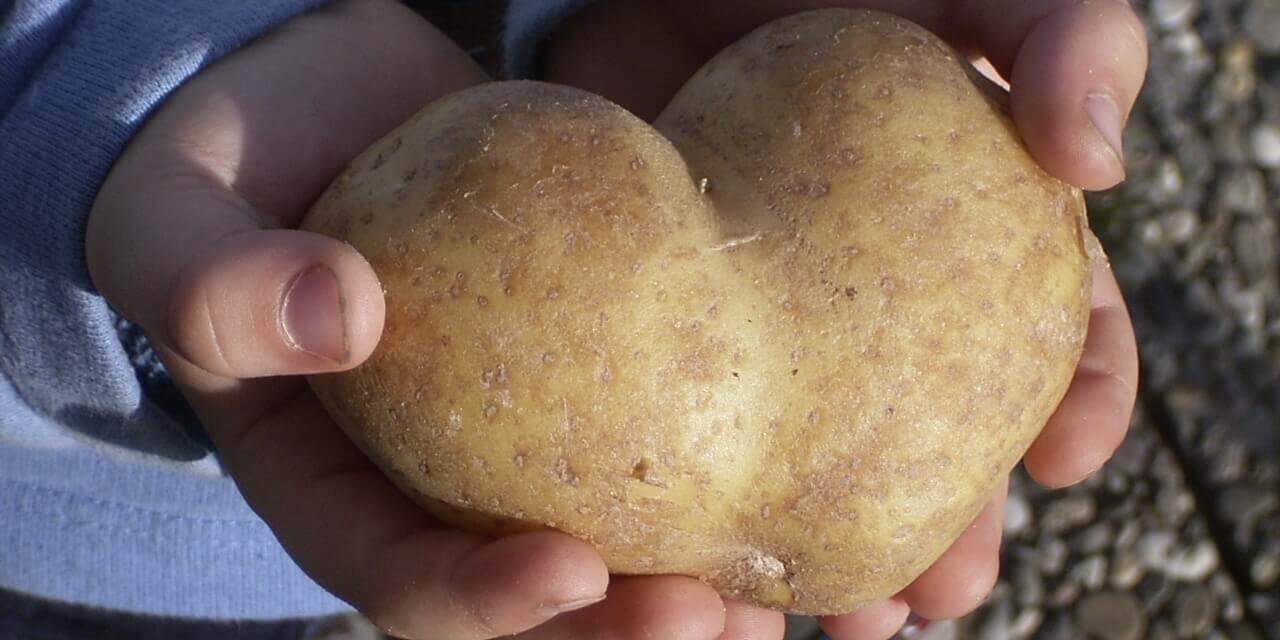 Fest zu Ehren der Kartoffel auf der Domäne Dahlem