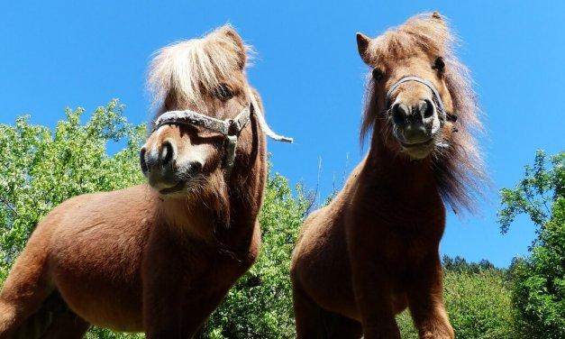 Ponyclub lädt zum Mittelalterfest ein