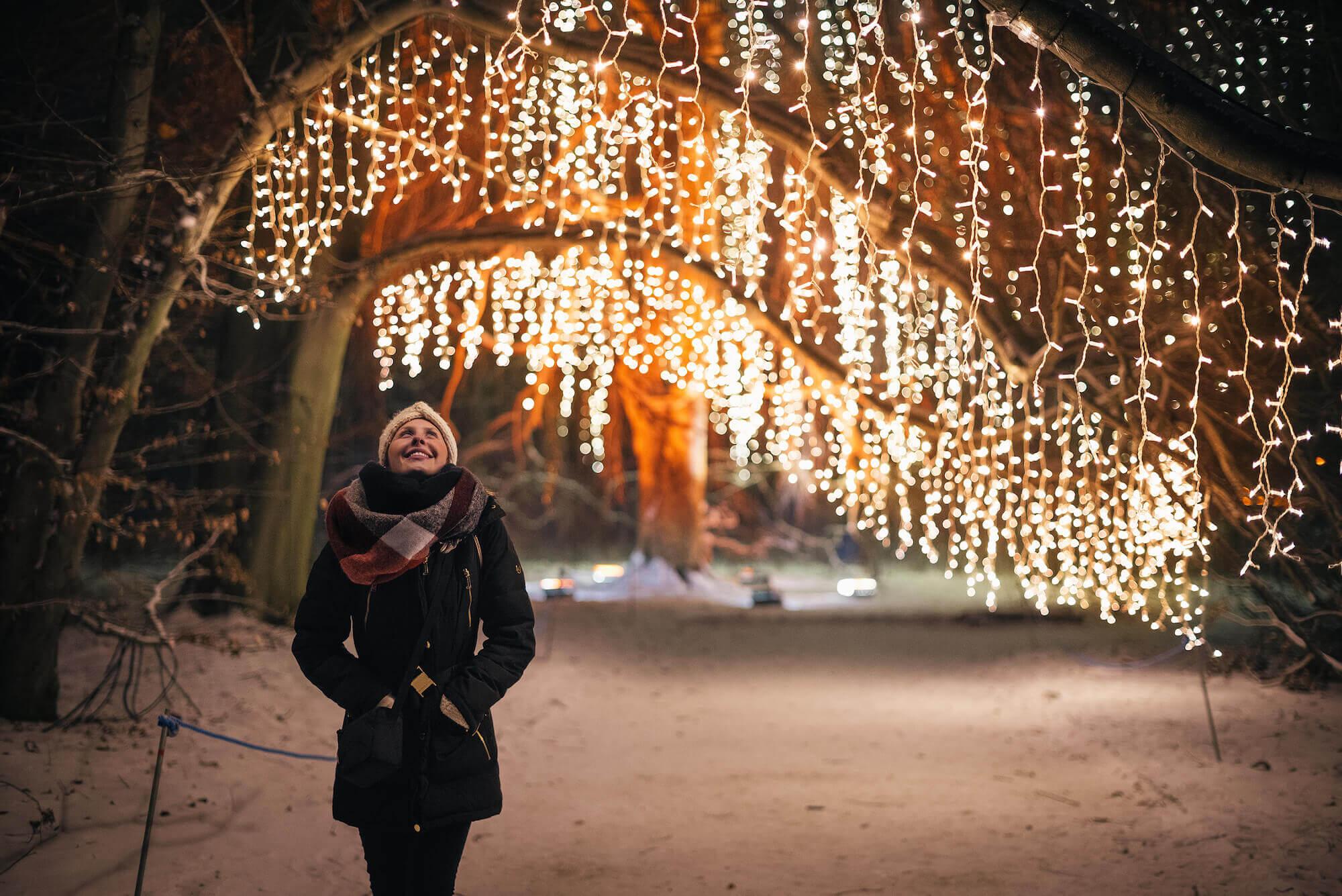 Christmas Garden In Lichterfelde Botanischer Garten Leuchtet Wieder Stadtrandnachrichten