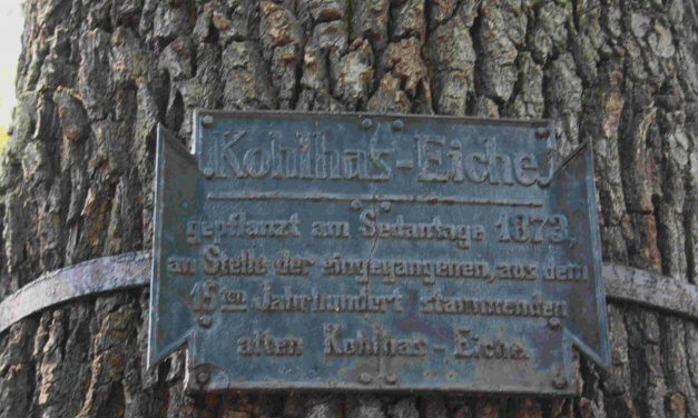 """Wannsee: Naturdenkmal """"Kohlhas-Eiche"""" muss gefällt werden"""