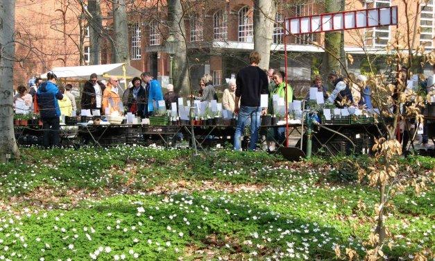 Pflanzsaison: Staudenmarkt lockt am Wochenende in den Botanischen Garten