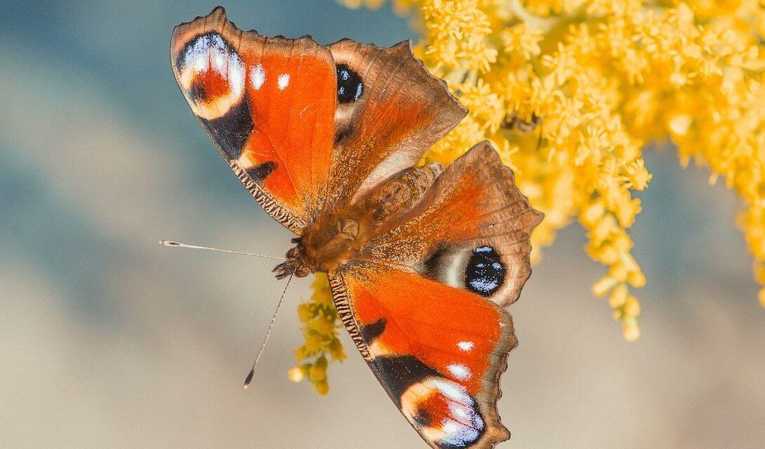 """""""Insektensommer"""": Nabu ruft Bürger zum Insektenzählen auf"""