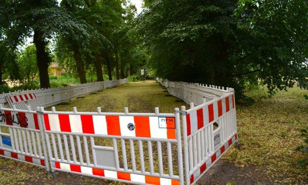 Keine Wildbienen gefunden: Fernradweg-Pläne für Gemeindepark Lankwitz bleiben bestehen