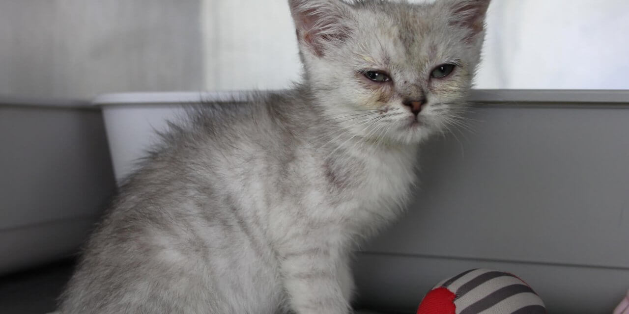 Erneut Katzen vor Fressnapf-Filiale ausgesetzt