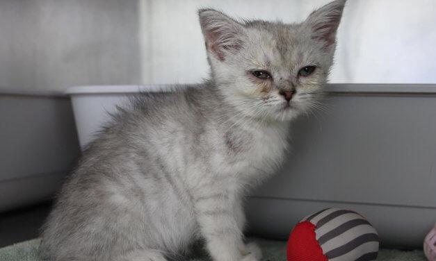 20 kranke Katzen vor Fressnapf-Filiale in Lichterfelde ausgesetzt