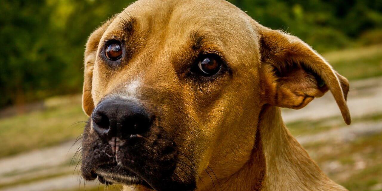 Warnung: Giftige Hundeköder in Teltow