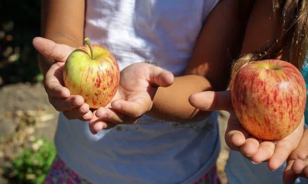 Natur pur!: Kinder- und Jugendhaus Albrecht Dürer lädt zum Gartenfest ein