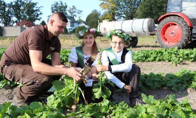 Rübchenfest in Ruhlsdorf: Die Teltower Edelknolle ist wieder zu haben