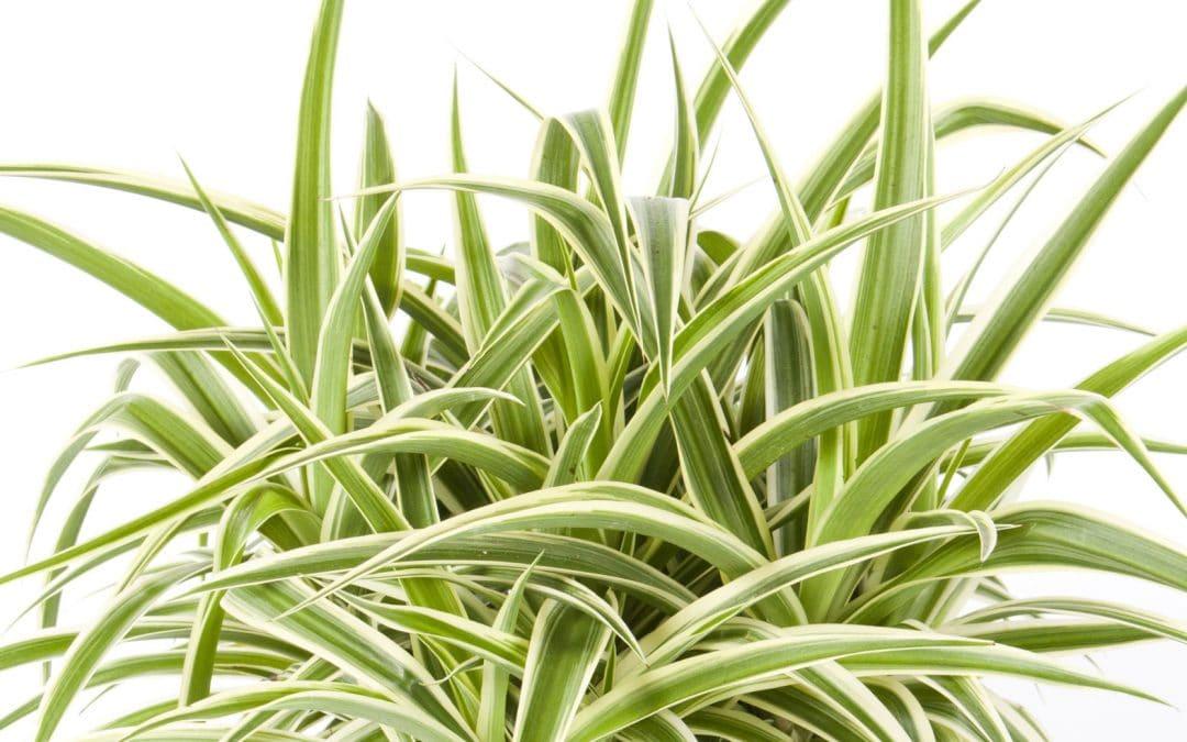 Geliebt, gegossen, vergessen: Phänomen Zimmerpflanze