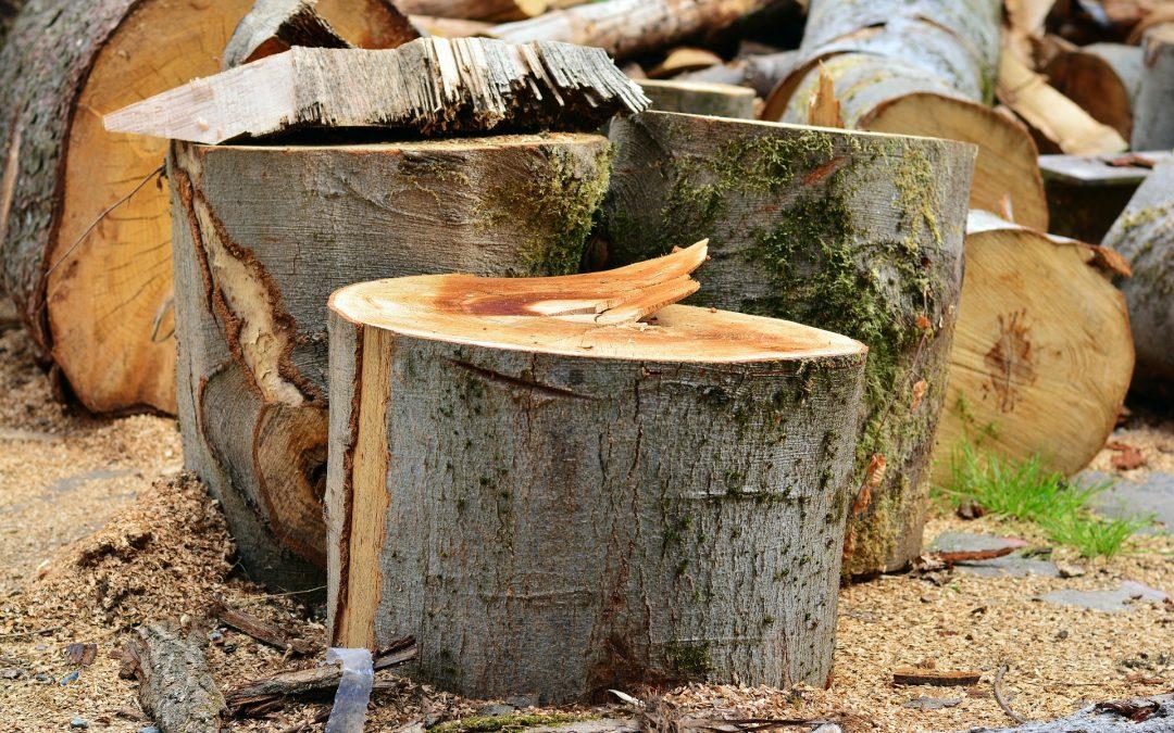 Baumfällungen im Bezirk bis Ende Februar