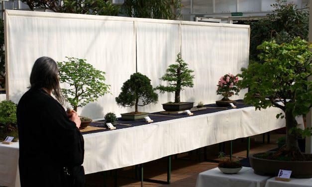 Kleine Bäume ganz groß: Bonsaiausstellung