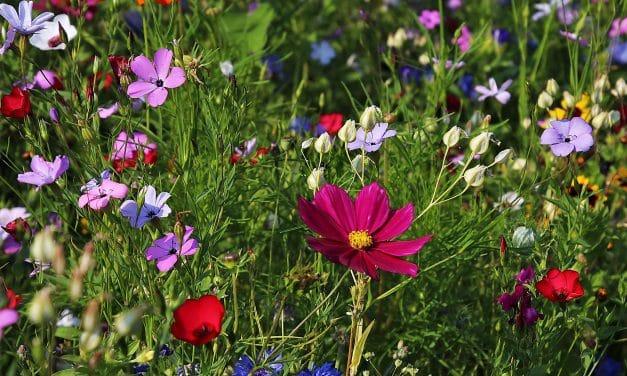Direktor des Botanischen Garten Berlin äußert sich zum Artensterben