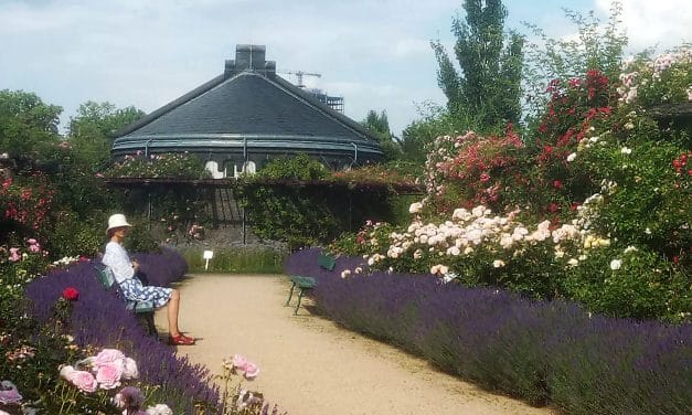 Der Botanische Garten – Der Pflanzenvielfalt zweiter Teil