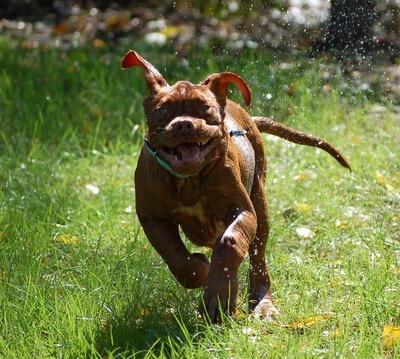 Hitzige Diskussion um freilaufende Hunde am Schlachtensee