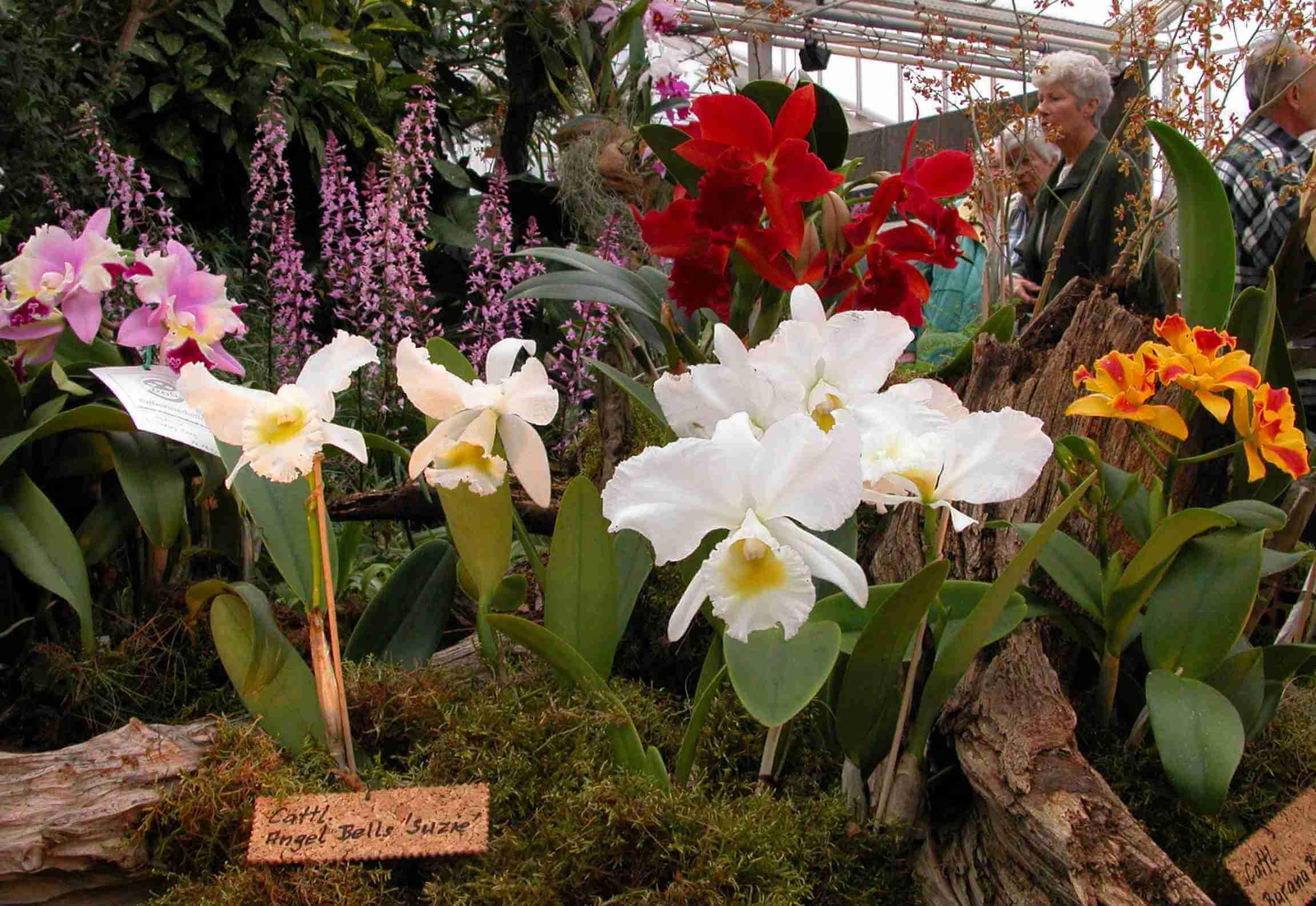 Orchideen-Show im Botanischen Garten